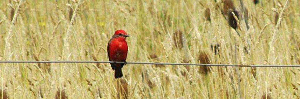 Pájaro rojo, Miriam Pösz