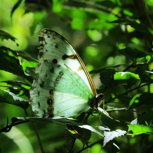El aleteo de una mariposa por Fabiana Fondevila