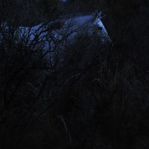 Recibir la noche oscura por Fabiana Fondevila