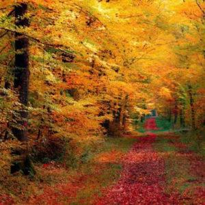 Vivir el otoño - Fabiana Fondevila